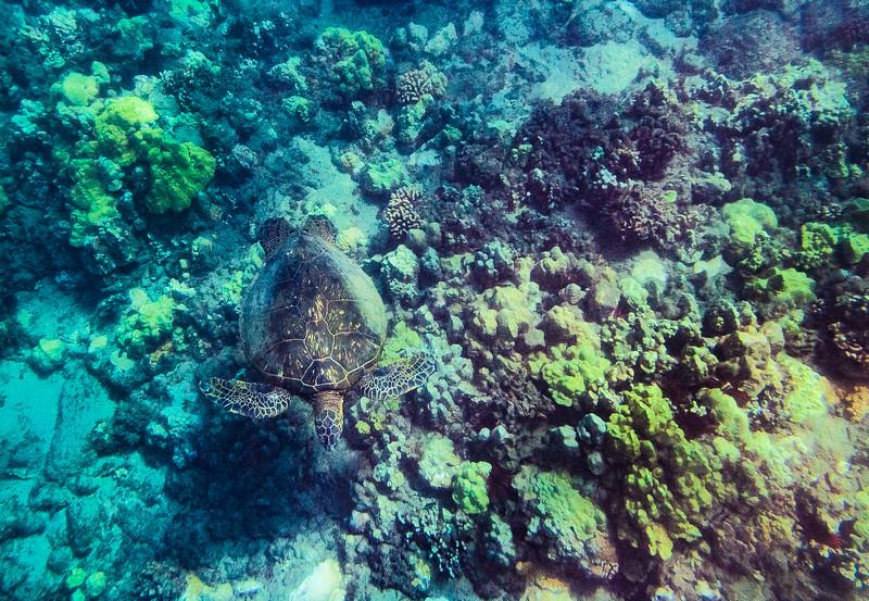 06_06_16 hawaii 6-18-2006 12-52-38 AM 1293.jpg
