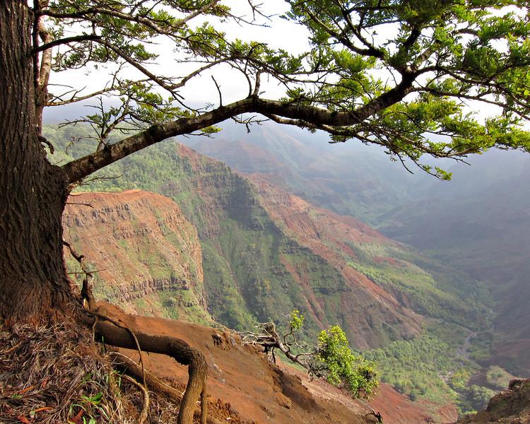 Kauai'10_S90_150.jpg