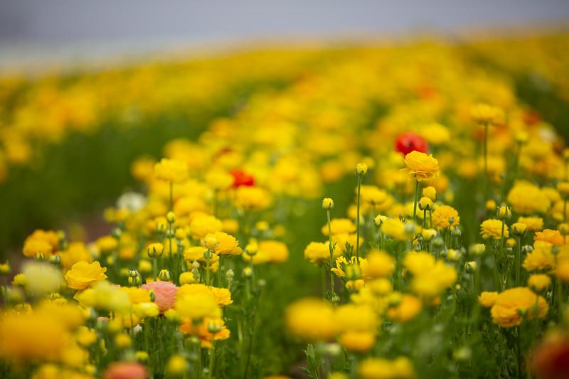 Spring Flowers B-322.jpg