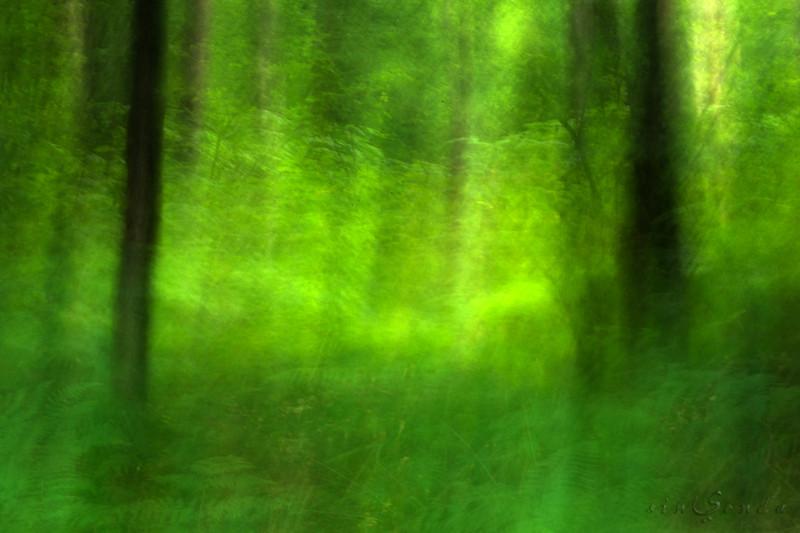 Espíritus del bosque. Brocéliande II