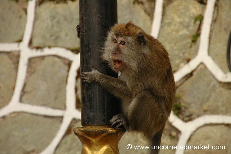 Monkey at Penang Hill - Penang, Malaysia