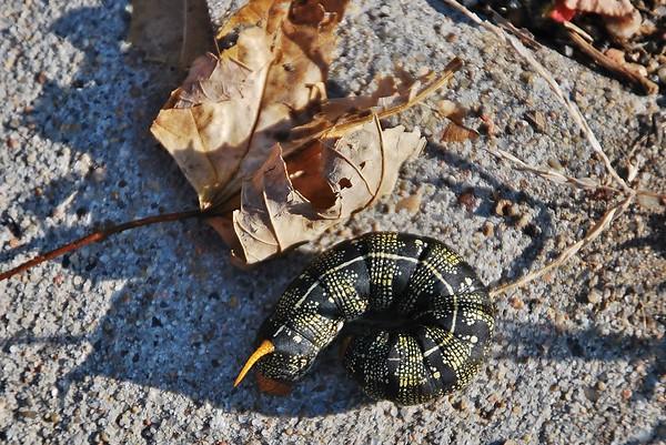 2012-10-28 Caterpillar