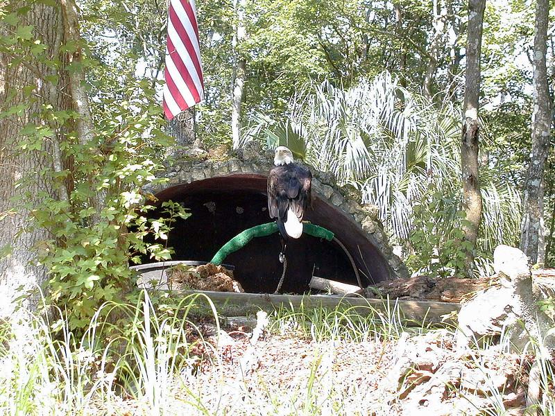 Tarpon Springs Wildlife Park (4).jpg