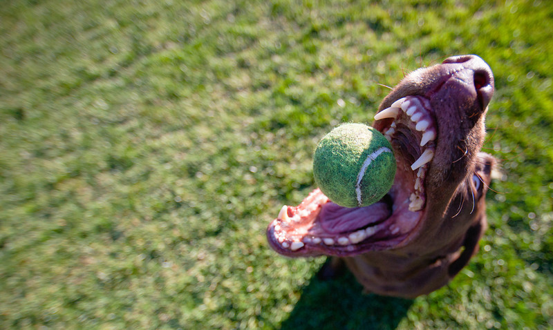 14mm-riley-ball-in-mouth-1.jpg