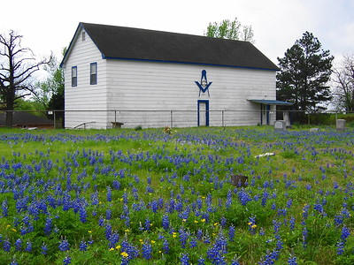 bluebonnet-became-texas-state-flower-in-1901