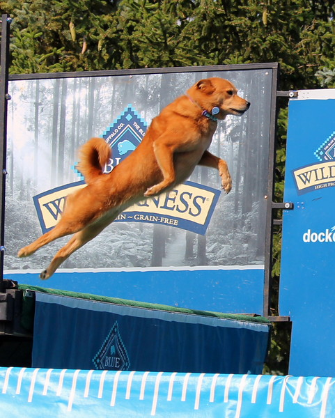 Dock Dogs at Fair-119.JPG