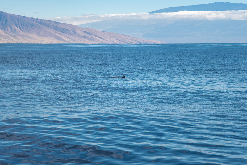 Then, the dolphins showed up