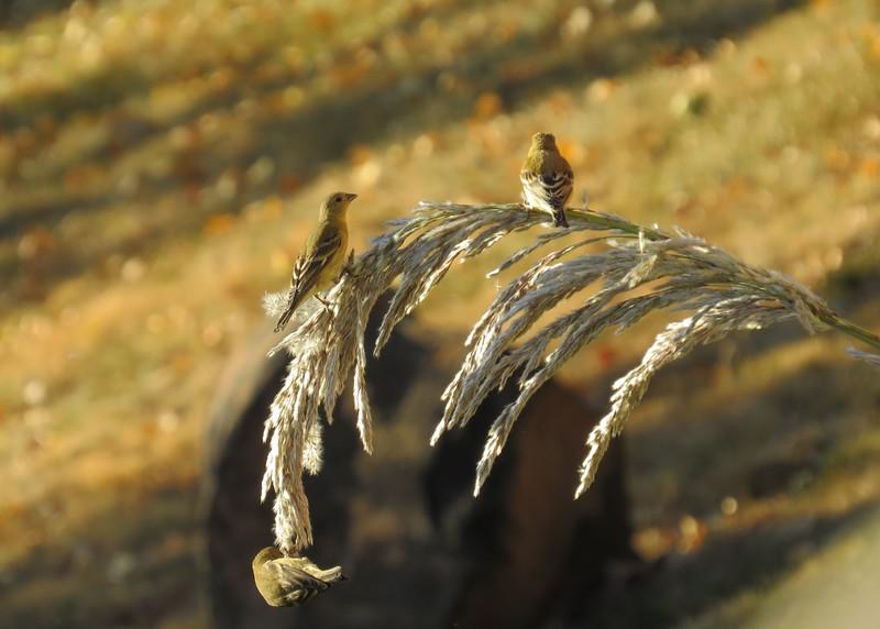 birds (104).JPG