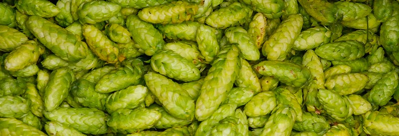 2019 Hope Bay Hops Harvest