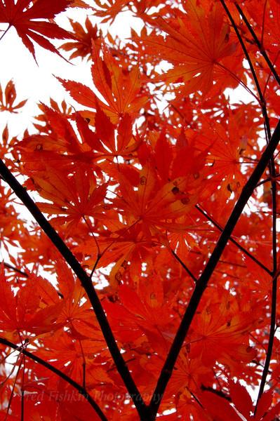 V leaves.jpg