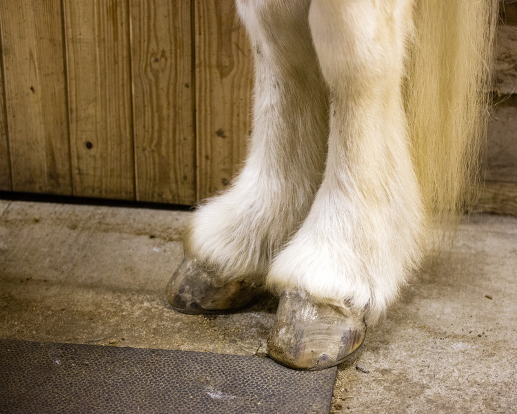 Beattle Bailey's feathered hooves...
