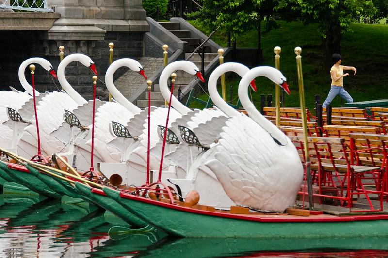 Swan Chi