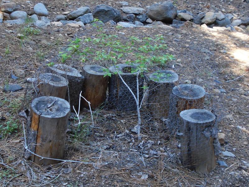 06-06-2015 First Watering Backyard Project (9).JPG