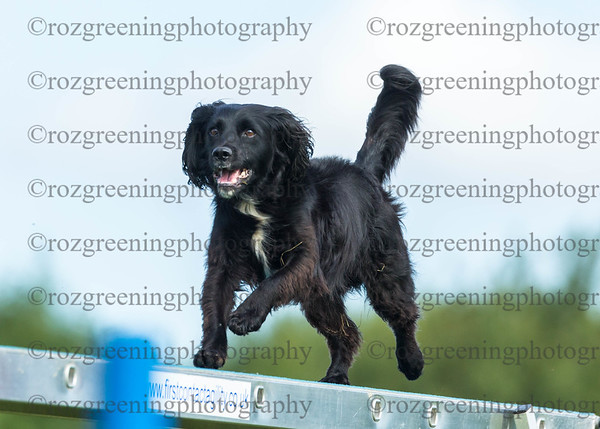 Bromsgrove DTC Saturday Ring 3 Medium Agility 6-7 Combined Crufts & Discover Dogs Q