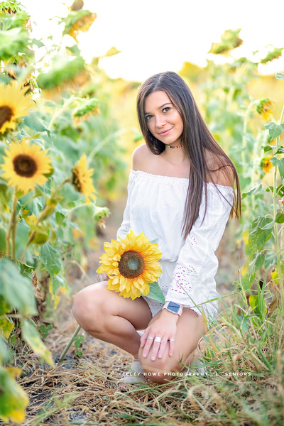 Sunflower 0483-Edit.jpg