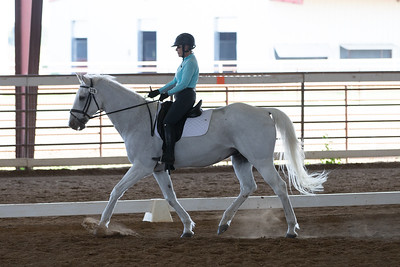 Horse 378