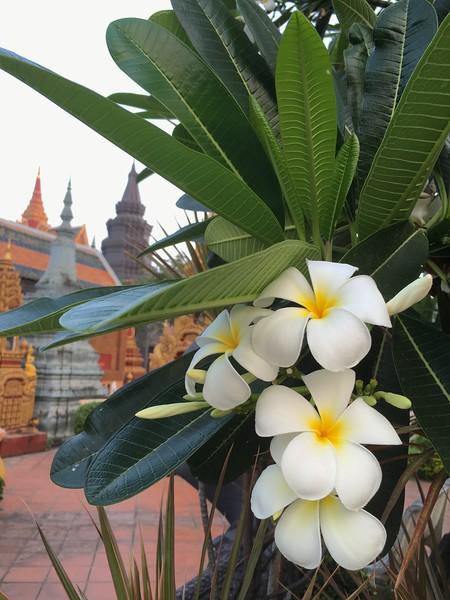Sunrise Walk in Siem Reap, Cambodia - January 2016