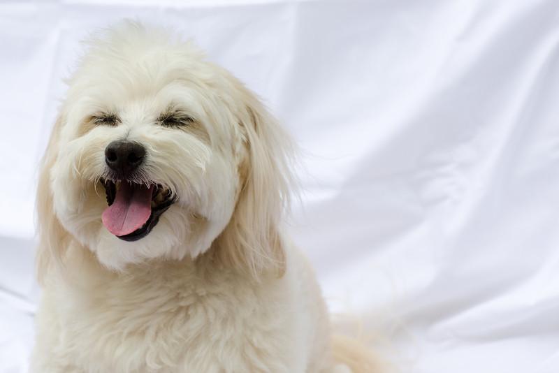 opal mike dogs (1 of 1)-61.jpg