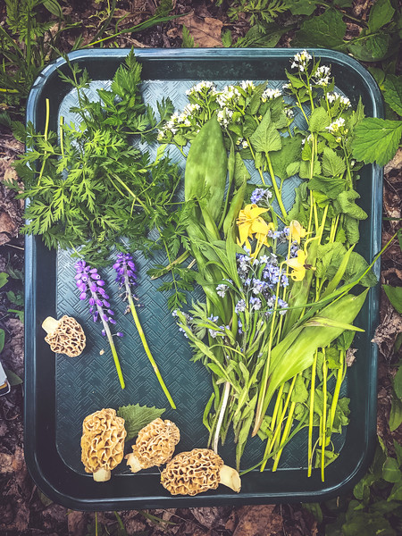 tray of foraged ingredients.jpg
