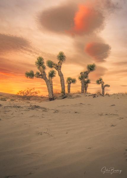 Joshua Tree Sunrise 2