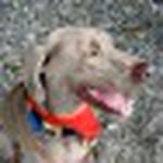 farley pups 092-2.jpg