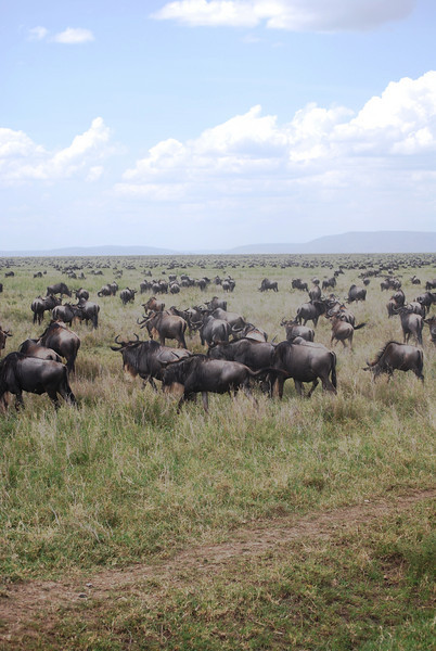 Serengeti (58).JPG