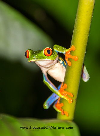 Costa Rica - 2016