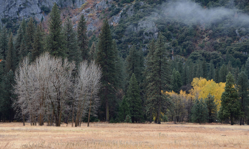The valley floor meadow. Can you spot the coyote?