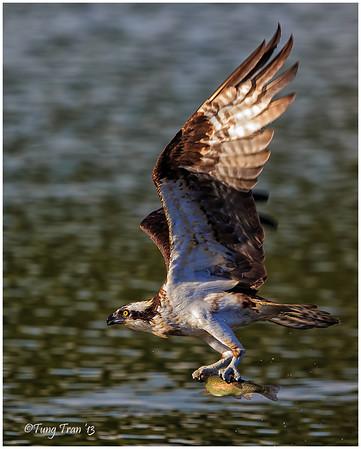 Bird Action Nov 2013