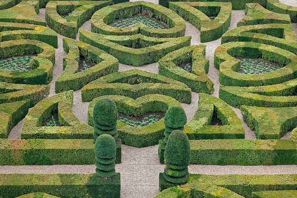 Château de Villandry - Jardin de vert