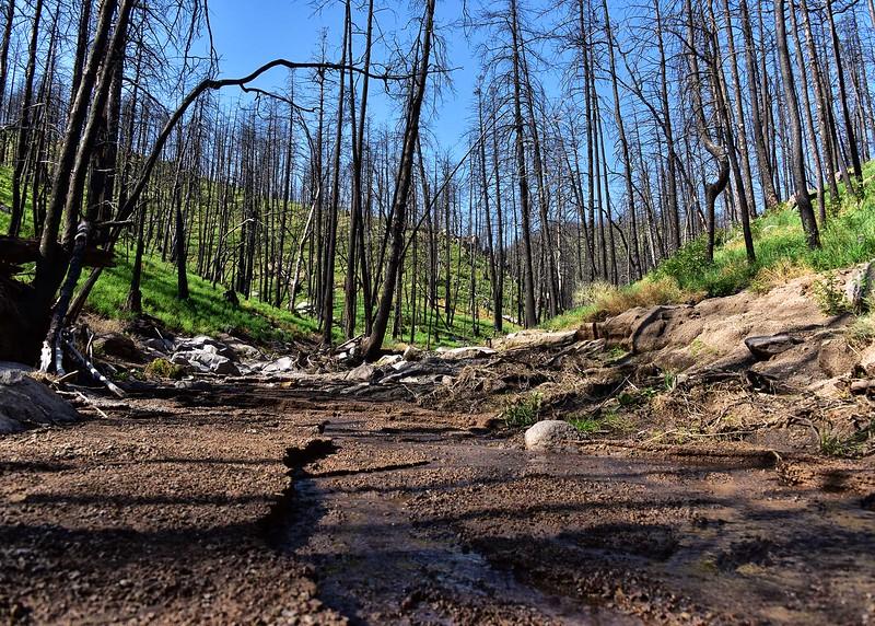 NEA_0164-7x5-Mills Canyon Trail.jpg