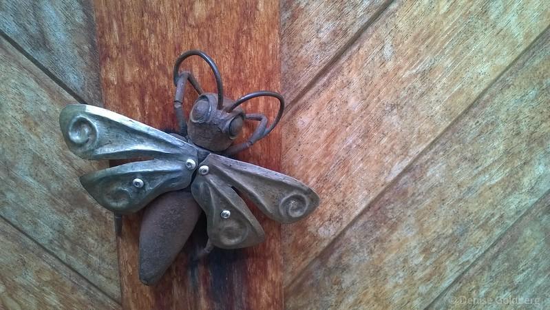 bug on a wall