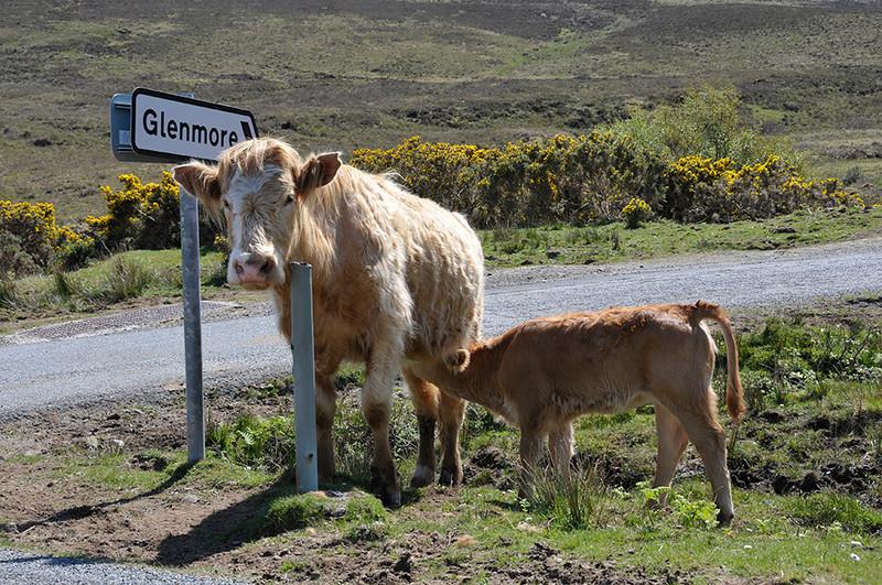 glenmore.jpg