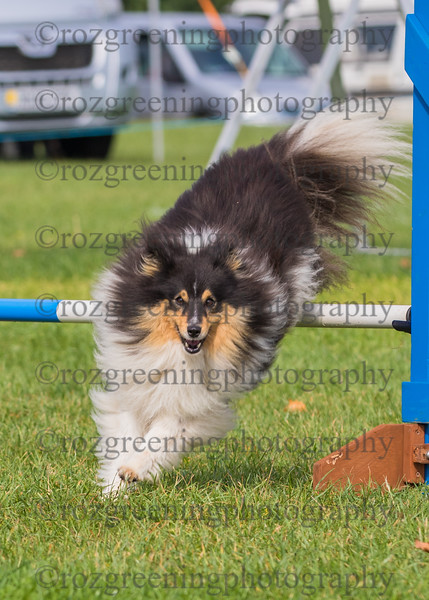 Bromsgrove Saturday Ring 1 Small Agility Combined 1-2