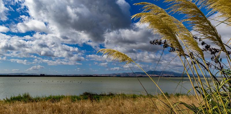 Am Lake Wairarapa