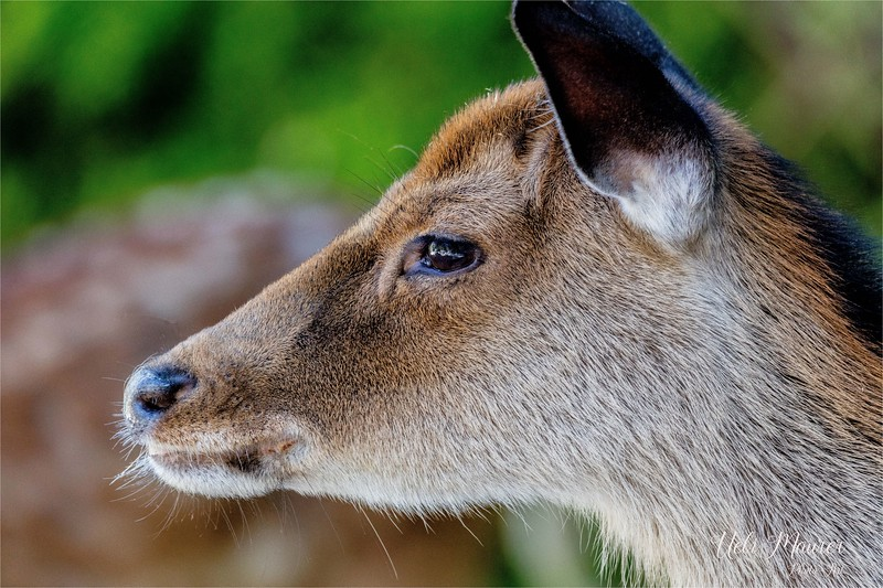 2016-09-07 Tierpark Goldau - 0U5A8708-Bearbeitet.jpg