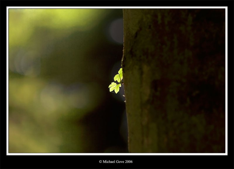 2 Leaves (64321163).jpg