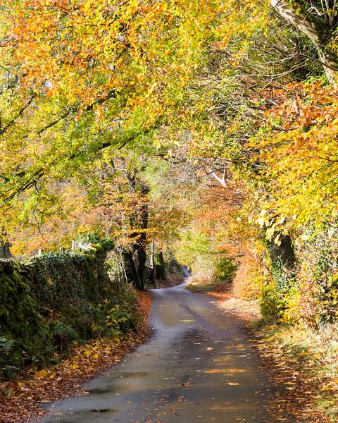 Autumn lane in the Lake District