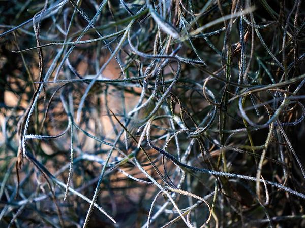 Natural Webs