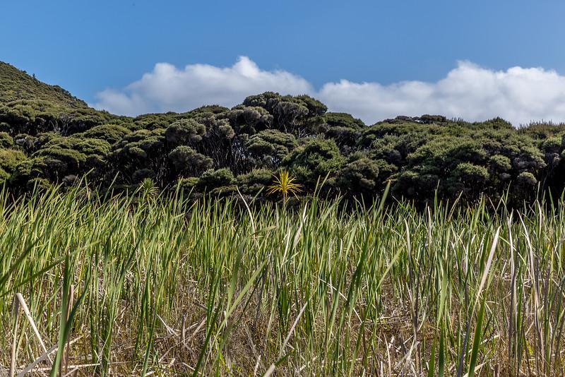 Auf dem Te Werahi Track