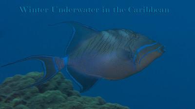 Winter Underwater in the Caribbean 2014