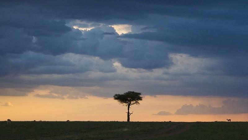 Rain coming, Naboisho Conservancy