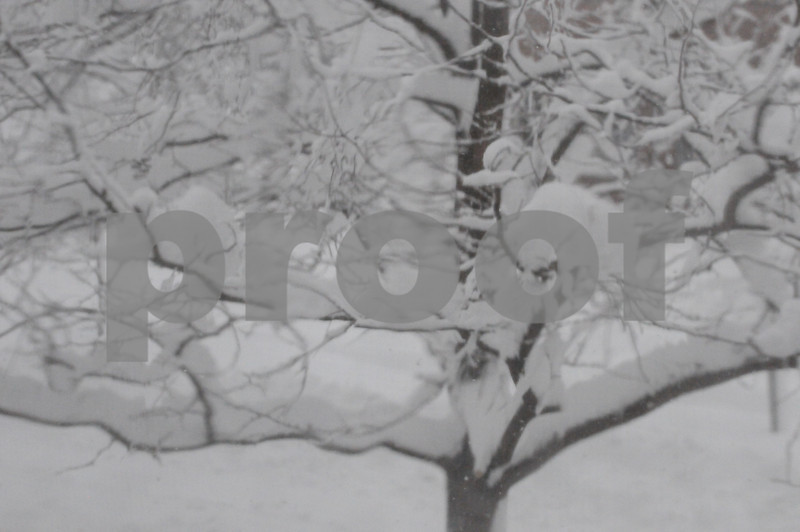 snow strom 004.JPG