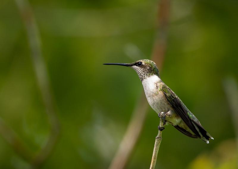 backyardbirds-4934-CR3_DxO_DeepPRIME.jpg
