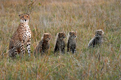 African Kitty Kats to Share