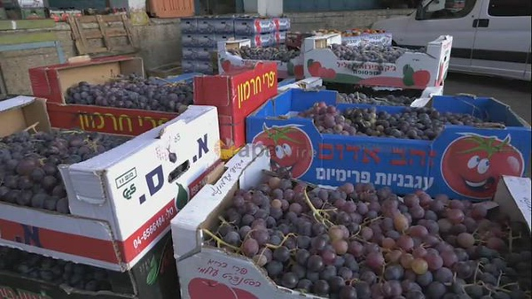 Palestinian farmers sell grapes in a popular market in the Wetst Bank city of Hebron