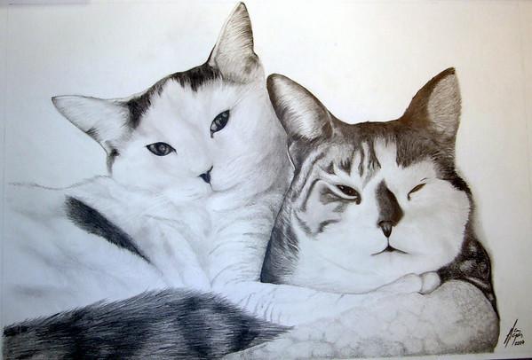The Sultana Commune kitties