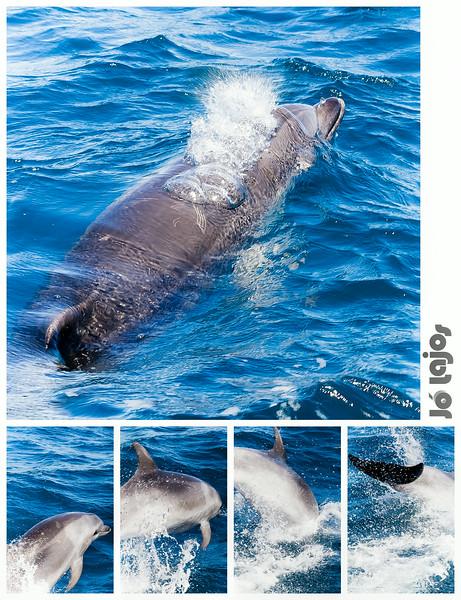 Delfindyptich2.jpg