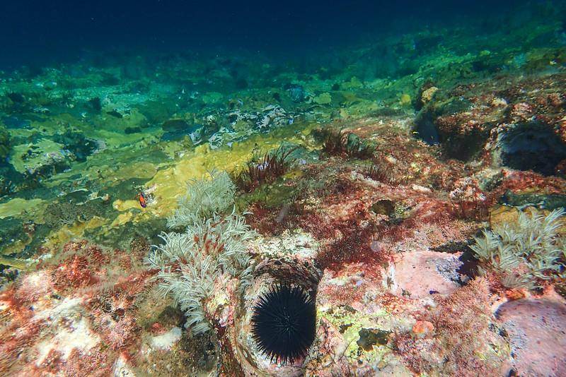 Galapagos-Best-202.jpg