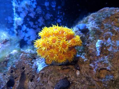 2018-07-11 - Reef tanks update - Sun Coral